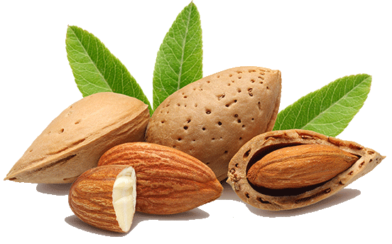 Almond for Bodybuilding
